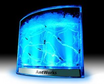 antworks_illuminited02