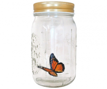 Butterfly in a Jar - the Ultimate Gift