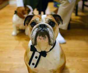 Dog Necktie