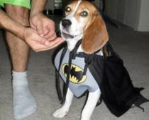 Buy the Batman Pet Costume on Amazon