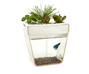 Desktop Aquarium with Mini Garden at the top