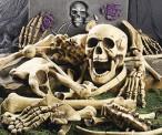 Halloween Bag of Skeleton Bones