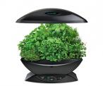 Dirt-free Indoor Herb Garden