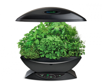 Dirt-free Indoor Herb Garden