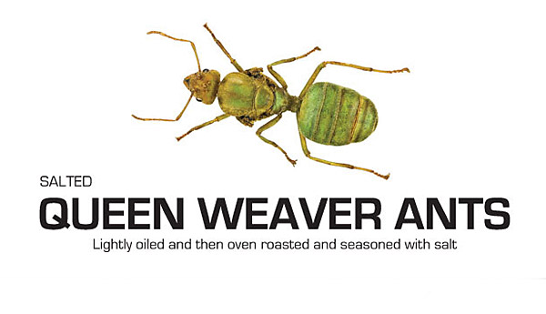 Salted Queen Weaver Ants