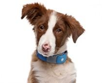 GPS Pet Tracker