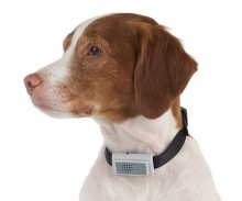 Bark Restraining Dog Collar