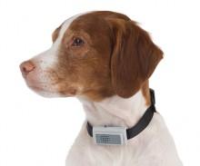 Bark Restraining Dog Collar