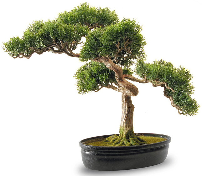 The Best Bonsai Trees On Amazon Want That Com