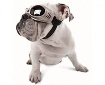 Doggles-Sunglasses for Dogs-1